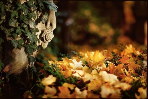 Herbstliche Erinnerunge, Kirchhof in der Bergmannstraße,Luisenstädtischer Friedhof, Berlin Südstern - © bildraum-f | fotografie