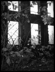 Detaild der Fassade aus der Ruine des Sauerstoffwerk II in Peenemünde   Usedom - © bildraum-f   fotografie