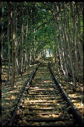 Stammbahn Berlin - Kleinmachnow | and also the trees - © bildraum-f | fotografie