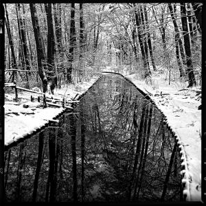 Winterzeit im Grunewald 2012 - © bildraum-f | fotografie